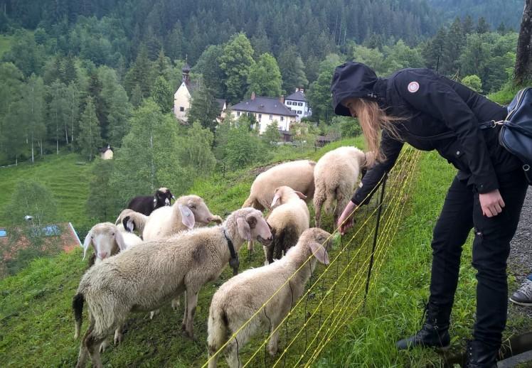 Leonie füttert Schafe